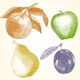 Wręcza rysującego set owoc z pomarańcze, Apple, bonkretą i śliwką, ilustracji