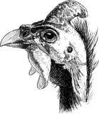Wręcza rysunek głowa męski gwinei ptactwo royalty ilustracja