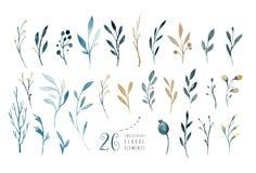 Wręcza rysunek odizolowywającej akwareli kwiecistą ilustrację z liśćmi, gałąź i kwiatami, indygowa Watercolour sztuka royalty ilustracja