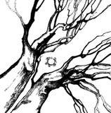 wręcza drzewa Zdjęcie Royalty Free