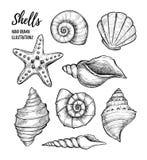 Wręcza patroszone wektorowe ilustracje - kolekcja seashells maria Zdjęcia Royalty Free