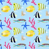 Wr?cza patroszonego seemless wz?r w akwarela dennym ?wiatowym naturalnym elemencie Koral skorup ryba na dziecka b??kita tle zdjęcia stock