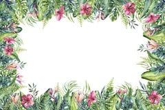 Wr?cza patroszonej akwareli tropikalnego invirtation backgraund flaming Egzot r??ane ptasie ilustracje, d?ungli drzewo, Brazil royalty ilustracja