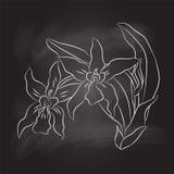 Wręcza rysunek orchidea na czerni desce - Wektorowa ilustracja Ilustracji