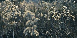 wrażenie łąka Zdjęcia Stock