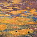 wrażenia losu angeles shangri Fotografia Royalty Free