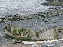 Wrack auf Strand die Antarktis lizenzfreies stockbild