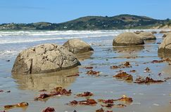 Wrack on the beach. Moeraki Boulders on Koekohe Beach , New Zealand Stock Photography