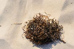 Wrack on a beach on summer. Wrack on a beach on summer at Baltic sea in Poland Stock Photo