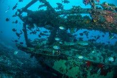 Wrack und Fische schwimmen in Gili, Lombok, Nusa Tenggara Barat, Indonesien-Unterwasserfoto Lizenzfreie Stockfotos