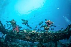 Wrack und Fische schwimmen in Gili, Lombok, Nusa Tenggara Barat, Indonesien-Unterwasserfoto Stockfoto