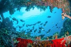 Wrack und Fische schwimmen in Gili, Lombok, Nusa Tenggara Barat, Indonesien-Unterwasserfoto Lizenzfreies Stockfoto