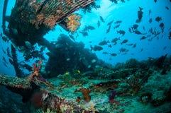 Wrack und Fische schwimmen in Gili, Lombok, Nusa Tenggara Barat, Indonesien-Unterwasserfoto Lizenzfreie Stockfotografie