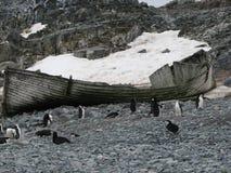 Wrack und Pinguine auf Strand die Antarktis lizenzfreie stockfotos