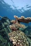 Wrackfrachter Kormoran - sank Tiran 1984 Lizenzfreies Stockfoto