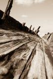Wrak van Maheno, Fraser Island, in sepia. royalty-vrije stock afbeelding