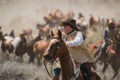 Wrangler del cowgirl che porta il suoi hackamore, coperta di cavallo, corda del cavo e sella alla stanza di puntina immagini stock