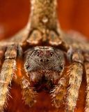 Wrap around spider Royalty Free Stock Photography