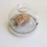 Wraped面包 免版税图库摄影