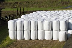 Wrapped bale silages Stock Images