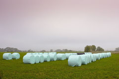 Wrapped bales Stock Image
