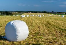 Wrapped Bales of Hay Stock Images