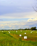 Wrapped Bales of Hay in field. A multitiude of hay bales lie in a farmer's field wrapped in white plastic stock image