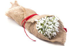 Wrapped in burlap bunch of white snowdrops Stock Photos