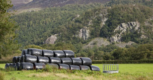 Wrapped hay bales Stock Images