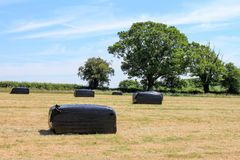 Wrapped hay bales Stock Photography