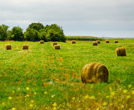 Wrapped hay bales on the countryside. With a little forest in the horizon Royalty Free Stock Photo