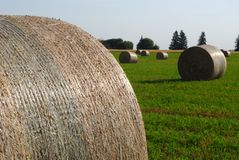 Wrapped hay bales in Manitoba. Stock Image