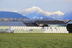 Wrapped Hay Bales and Mountain Landscape Royalty Free Stock Photography