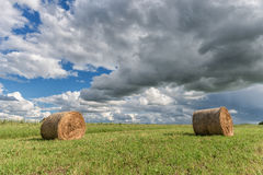 Wrapped Round Brown Hay Bales Field. Rural Area. Landscape. Royalty Free Stock Image