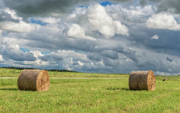 Wrapped Round Brown Hay Bales Field. Rural Area. Landscape. Cloudy Sky and Walking Stork on the left. Stock Image