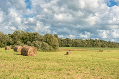 Wrapped Round Brown Hay Bales Field. Rural Area. Landscape. Standing Stork in Background Stock Photos