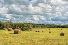 Wrapped Round Brown Hay Bales Field. Rural Area. Landscape. Stork standing on top Royalty Free Stock Photography