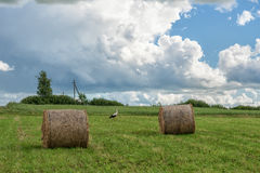 Wrapped Round Brown Hay Bales Field. Rural Area. Landscape. Walking Stork in Background Royalty Free Stock Images