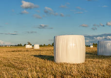 Wrapped Round White Hay Bales Field. Rural Area. Closeup Stock Photos