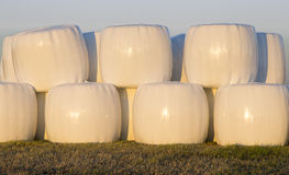 Wrapped Silage Bales Stock Images