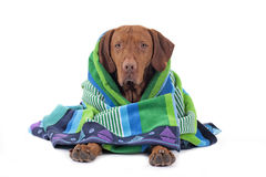 Wrapped in a towel Royalty Free Stock Photography