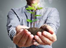 wręcza rośliny Zdjęcie Royalty Free
