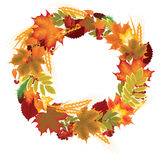 Wreath of autumn leaves, berries and ears Royalty Free Stock Images