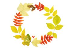A wreath of autumn leaves, cones, berries. stock photos