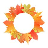 Wreath from autumn leaves of maple, oak, chestnut, mulberry. Royalty Free Stock Photos