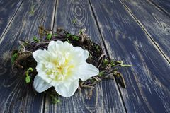 White beautiful narcissus and decorative wreath of birch branches with young leaves and earrings on old rough wooden background stock photos