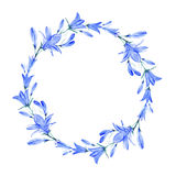 Wreath with bluebell flowers. Bluebell flowers.Wreath with bluebell.Watercolor hand drawn illustration Royalty Free Stock Image