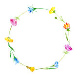 Wreath of a bluebell, grass, tansy and floral. Stock Images