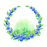 Wreath of a blueberry. Garland of a forest berry.Watercolor hand drawn illustration.White background Stock Photography