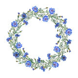 Wreath border frame with summer herbs, meadow flowers.